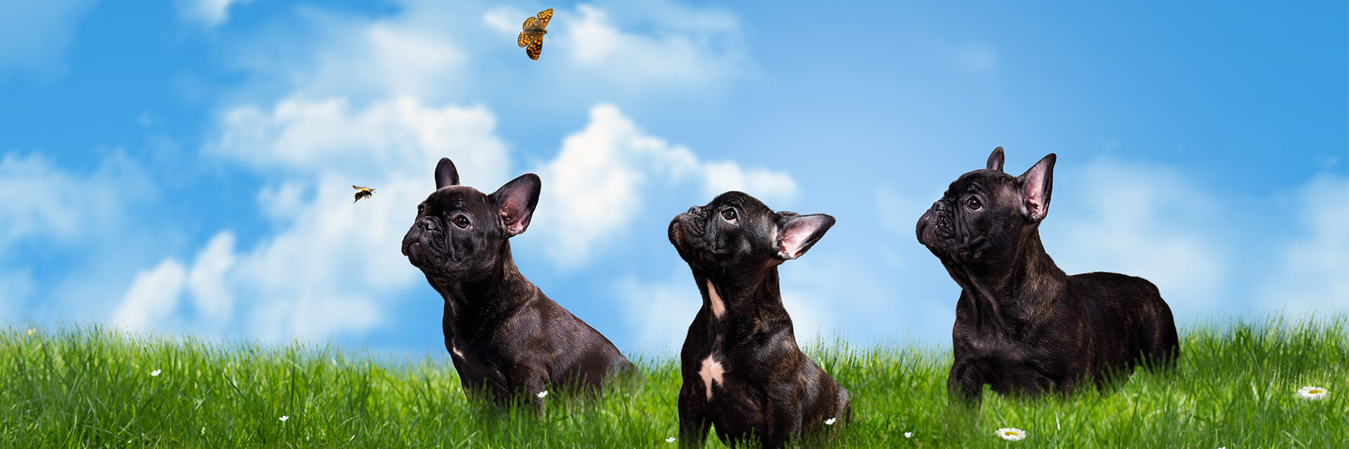 3 puppy dogs in field looking at bee and butterfly
