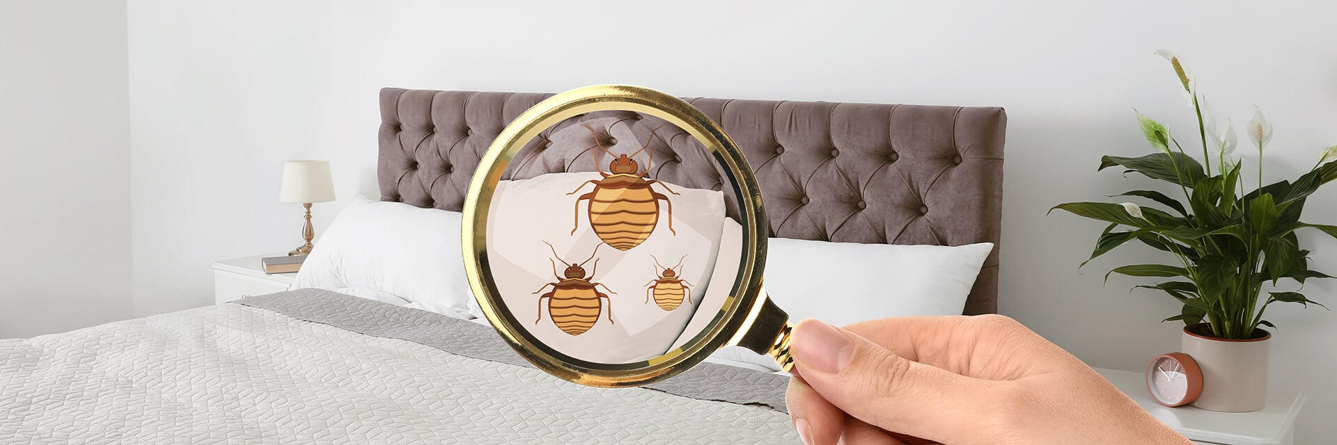Detect Bed bug using a magnifier