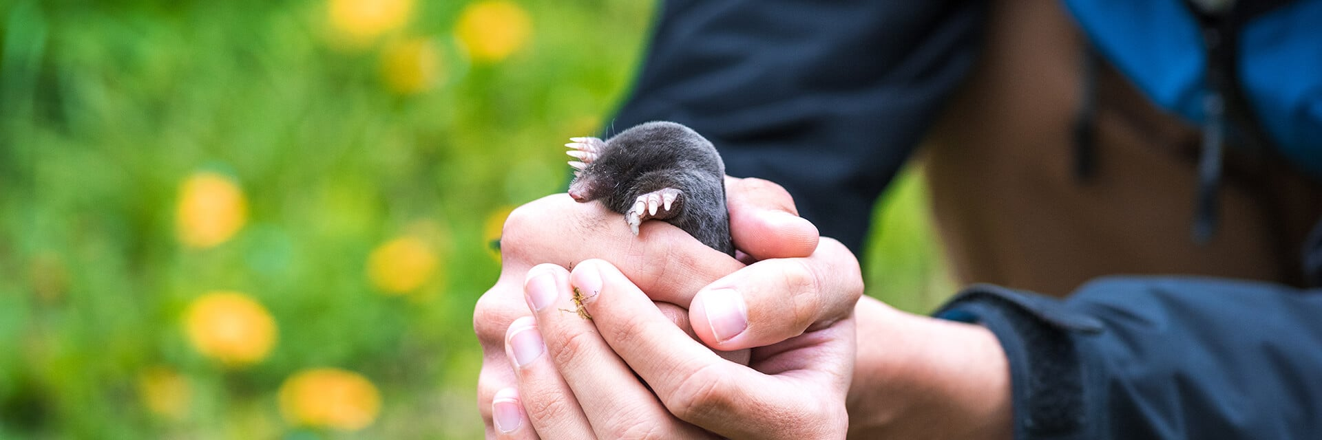 Man holding a mole in a flower garden